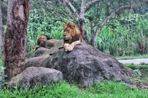 Mara River Safari Lodge and Bali Safari